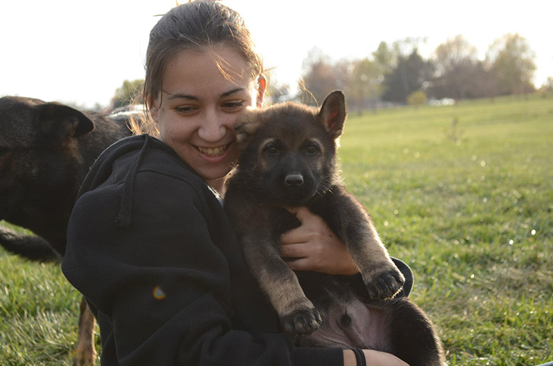 Buying A Zwinger Von Der Bauerhof German Shepherd Puppy